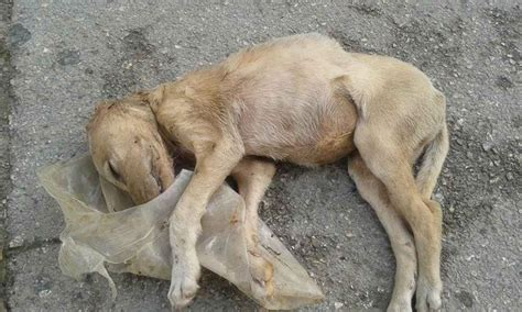 Another case of animal cruelty? Dog appears to have been