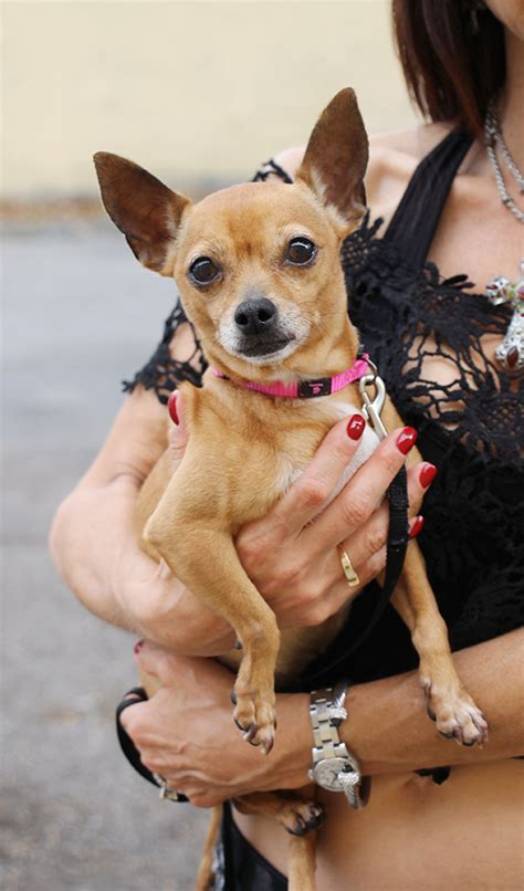 Small Dogs For Adoption at Glimmer of Life Rescue in South