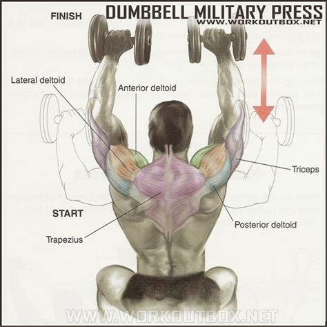 How To Dumbbell Military Press (With images) | Shoulder
