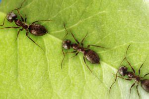 10 cool facts about ants! | National Geographic Kids