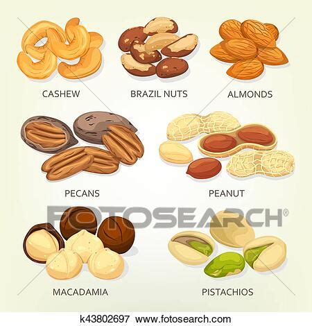 Clip Art of Brazil nuts and cashew fruit seeds, grains