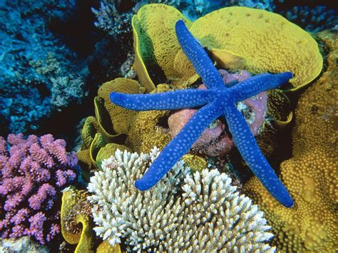 Great Barrier Reef, Australia – The world's largest single